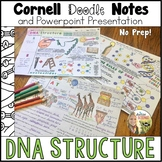 DNA Structure Cornell Doodle Notes and Powerpoint