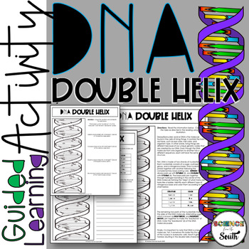 Dna Structure Double Helix Coloring Printable Worksheet Tpt