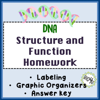 dna structure function homework worksheet by bio4u high school biology. Black Bedroom Furniture Sets. Home Design Ideas