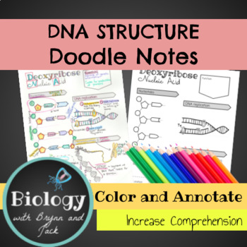 DNA Structure, Function and Replication Doodle Notes | TpT