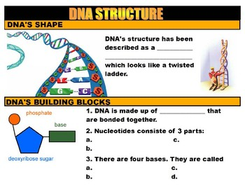 DNA: Structure, Function and Replication (YouTube Vodcast Notes)