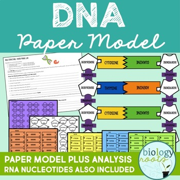 DNA Model- Paper Project