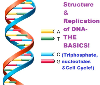 DNA Structure, Replication & Cell Cycle LESSON PLAN!