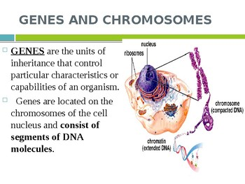 DNA Structure & Replication, rDNA, Protein Synthesis and Mutations