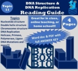 Guided Reading: DNA Structure, DNA Replication, Helicase,