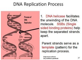 DNA Structure and Function e-zip learning files for AP and Advanced Biology