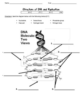 DNA Structure and Replication worksheet by Scientific ...