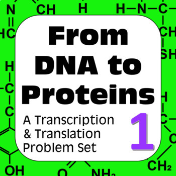 Genetics DNA Transcription & Translation: Construct a Poly