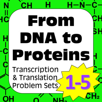 Protein Synthesis DNA Transcription Translation Construct Polypeptide HighSchool
