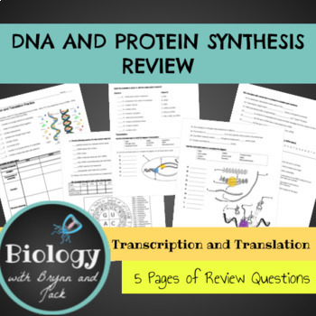 DNA, Transcription, Translation and Protein Synthesis Bundle