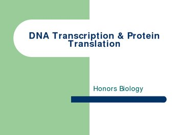 DNA Transcription and Protien Synthesis