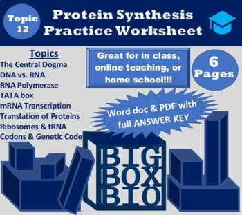 DNA Transcription and Translation Practice Worksheet with Key