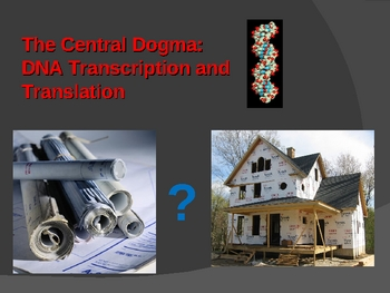 DNA Transcription and Translation: The Central Dogma