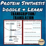 DNA Transcription vs Translation (Protein Synthesis) Biology Science Doodle Note