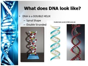 DNA Translation Notes