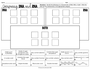 DNA VS RNA Card Sort for Interactive Notebooks, Review, or Assessment