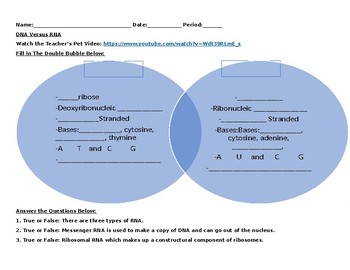 DNA Versus RNA Video Worksheet (Editable)