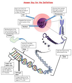 DNA Vocab InterActive Notebook Study Tool