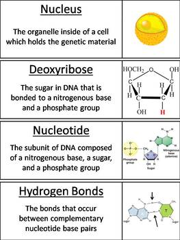 DNA Word Wall Cards