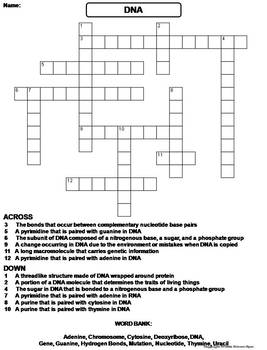 DNA Structure and Function Worksheet/ Crossword Puzzle