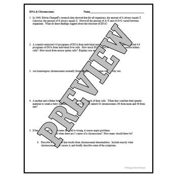 Middle School DNA & Chromosomes Worksheet NGSS MS-LS3-1 HS-LS3-1