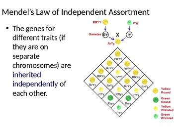DNA and Chromosomes Presentation