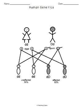 DNA and Genes Crossword Puzzle