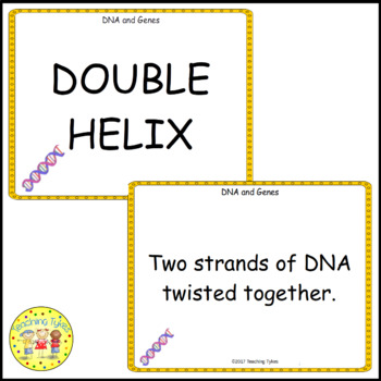 DNA and Genes Vocabulary Cards