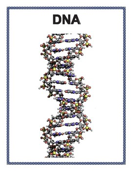DNA and Genetics Posters