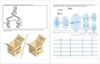 DNA and Genetics Unit Homework