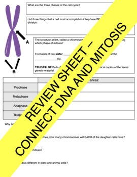 DNA and Mitosis Study Guide