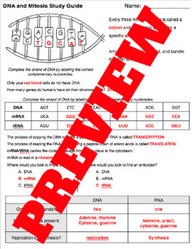 DNA and Cell Cycle Study Guide