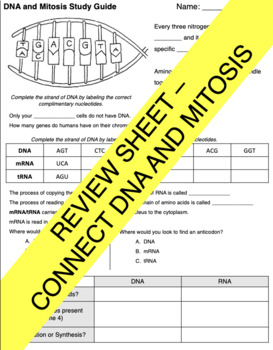 DNA and Cell Cycle Review