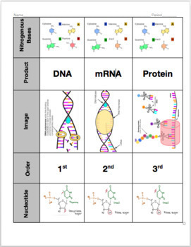 DNA and Protein Synthesis Card Sort
