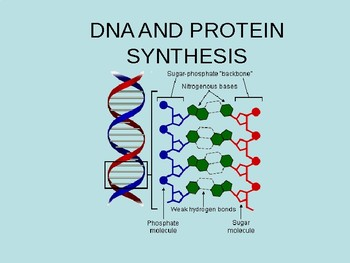 DNA and Protein Synthesis Powerpoint