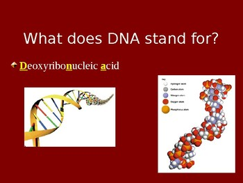 DNA and Protein Synthesis Unit
