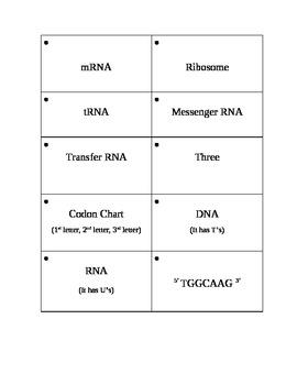 Biology: 20 DNA and RNA Flash Cards/Memory Game Set 2