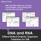 DNA and RNA One-page Graphic Organizer Foldable for INB