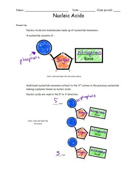 DNA and RNA Worksheet