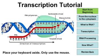 DNA and Transcription Interactive Tutorial