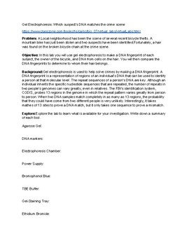 Gel Electrophoresis Virtual Lab Worksheet