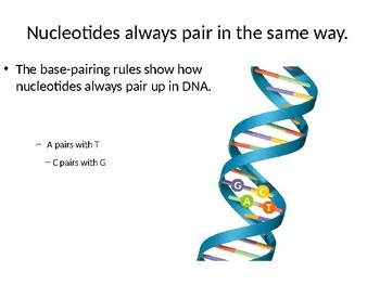 DNA lesson