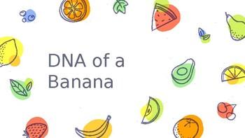 DNA of a Banana