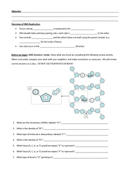 DNA replication: Explanation, Exploration, and Extension