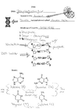 DNA structure guided notes