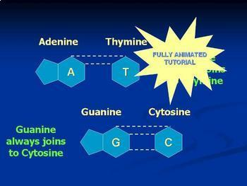 DNA structure powerpoint animation of DNA structure and replication