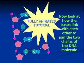 DNA structure - Interactive PowerPoint animation of DNA structure. Teacher Ed