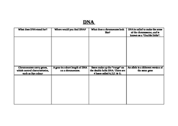 DNA structure storyboard
