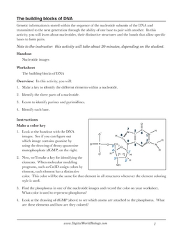dna structure worksheet identifying nucleotides by digital world biology. Black Bedroom Furniture Sets. Home Design Ideas