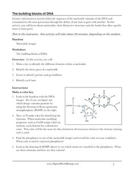 DNA structure worksheet: Identifying nucleotides by Digital World ...